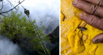 Le dernier chasseur de miel : voici la vie à haut risque de l'homme qui récolte le miel hallucinogène des abeilles géantes