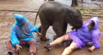 Il cucciolo di elefante colpisce la donna, ma è la sua prossima mossa ad aver reso virale il video