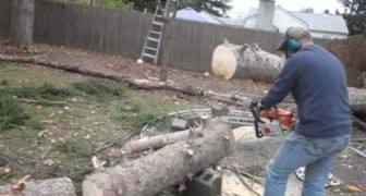 He cuts off part of the tree...but what happens next is AMAZING !!