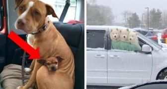 20 leuke foto's van honden die jouw dag een andere wending zullen geven