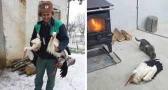 In Bulgaria, il freddo ha congelato le cicogne: l'impegno della comunità per salvarle è commovente