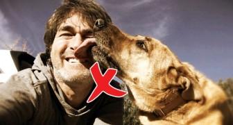 Es gibt eine sehr ernste Begründung warum du dich nicht von deinem Hund im Gesicht ablecken lassen solltest