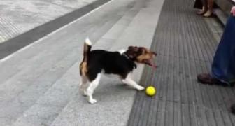I cani intelligenti giocano anche da soli