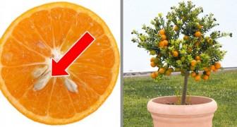 6 alberi che potete far crescere a partire dai semi dei loro frutti