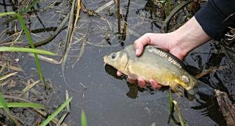 Uno studio lancia l'allarme: i fiumi sono pieni di rifiuti farmacologici