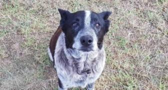 Una bimba di 3 anni si perde nel bosco: il suo cane resta con lei tutta la notte, e poi chiama i soccorsi