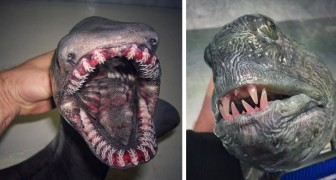 This fisherman photographs the strangest creatures he finds in his fishing nets and the result looks like a horror movie!