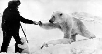 Histoire d'un homme qui a sauvé un ours polaire orphelin et qui a instauré une amitié unique avec lui