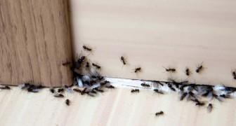 9 remedios totalmente naturales para tener las hormigas alejadas de tu casa