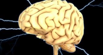 Pour la première fois, les scientifiques ont réussi à maintenir un cerveau en vie à l'extérieur du corps