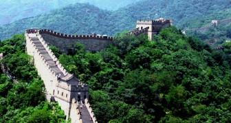In 5 anni la Cina ha ricoperto di alberi un'area più grande dell'Italia