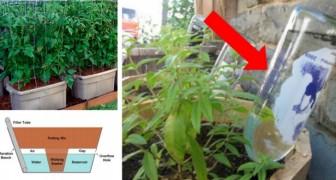 11 DIY automatische Bewässerungssysteme, die das Gärtnern noch einfacher machen