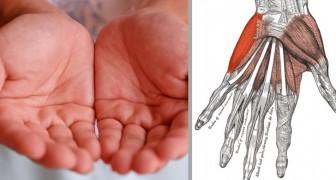 7 Signale zu deinem Gesundheitszustand die du erkennst wenn du deine Hände betrachtest
