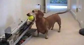 Jerry vuole giocare con la pallina