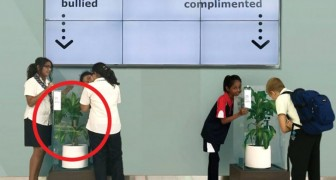 IKEA asks students to bully a plant for 30 days and the result opens our eyes!