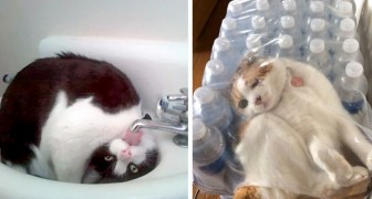 Awkward and prankish cats?! After seeing these images you will love them even more!