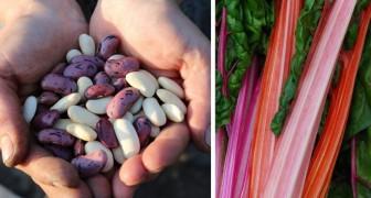 11 potentiell giftige Lebensmittel die wir gerne essen