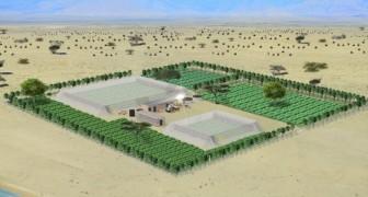 Gewassen kweken in de woestijn zonder dat er water nodig is, dat kan met de revolutionaire kassen van Charlie Paton