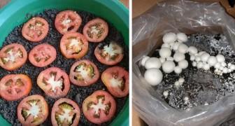Vous n'avez pas de jardin ? Voici 8 légumes ordinaires que vous pouvez cultiver dans votre appartement.