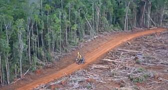 Enorme bossen worden met de grond gelijkgemaakt om palmolie te produceren: de foto's zijn overduidelijk