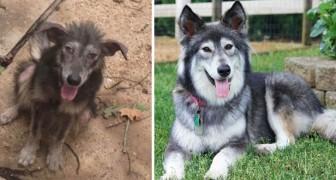19 Hunde vor und nach ihrer Adoption, die ihr nicht wiedererkannt hättet