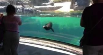 Leone marino premuroso