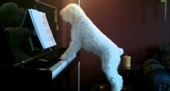 E' lui il re del pianoforte... e non solo!
