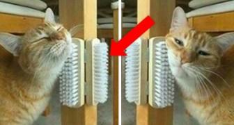 10 projets faits maison peu coûteux à copier tout de suite pour rendre votre chat heureux.