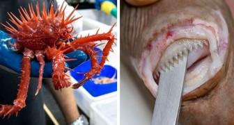 Wissenschaftler veröffentlichen Bilder von Tieren, die in den Tiefen der Meere leben: Sie sind furchterregend