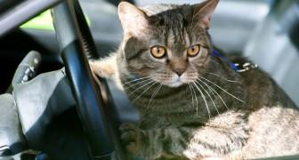 Ze gaan naar het wegrestaurant en laten de kat in de auto zitten: hij doet de deuren dicht en laat ze buiten staan