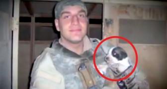 Os pais adotam o cachorro do filho que morreu: enquanto faziam um vídeo acontece algo muito estranho