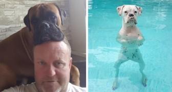 25 foto's om te bewijzen dat boxers de meest grappige en bizarre honden ooit zijn