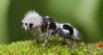 15 seltsame Tiere, von denen du nicht geglaubt hast, dass sie existieren