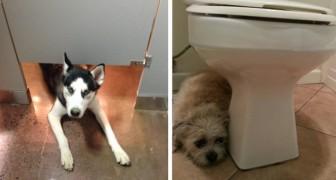 Votre chien vous suit-il lorsque vous allez aux toilettes ? Voilà ce qu'il essaie de vous dire.