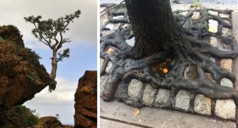 15 arbres qui ne craignent pas les difficultés et qui ont continué à grandir envers et contre tous