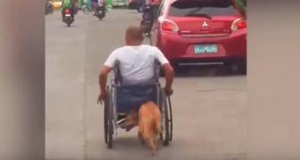 Questo cane amorevole spinge ogni giorno la sedia a rotelle del suo amico: una scena che fa sciogliere il cuore