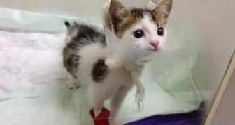 Efter att ha räddat den från soporna upptäcker personen som hjälpt den att den här katten är en ovanlig liten skatt