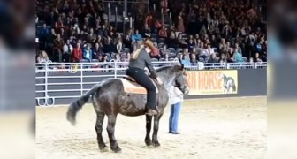 They start the horse's favorite song and the reaction of the animal triggers the applause of the crowd
