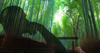 The fable of the fern and the bamboo is what you should read if you are having a hard time
