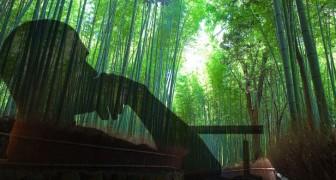 A fábula da samambaia e do bambu que você deve ler se está passando por um momento difícil