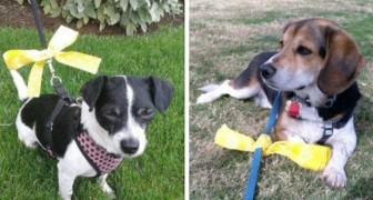 Ecco come devi comportarti se vedi un cane con un fiocco giallo legato al guinzaglio