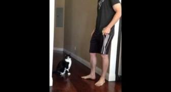 Le chat : prends moi dans tes bras