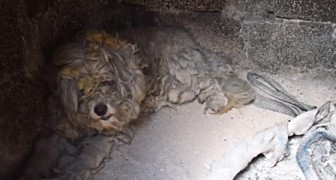 In Greece --- two terrified poodles save themselves from a wildfire by hiding in an oven