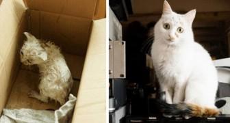 16 Bilder von Katzen vor und nach der Adoption, die Ihr Herz erwärmen werden