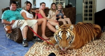 Una tigre in famiglia, anzi sette