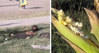 15 bilder av konstiga saker som bara kan hända när det är riktigt väldigt varmt