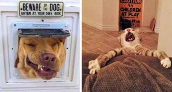 Quelques photos amusantes de chiens et de chats qui vous feront rire.