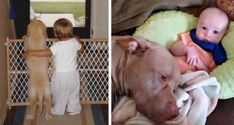 17 images of rare sweetness that illustrate the wonderful friendship between children and dogs!