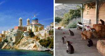 Occuparsi di una colonia di gatti su una splendida isola greca: aperte le selezioni per il lavoro dei sogni