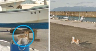 Een hond gooit roet in het eten van Google Street View z'n werk: hij staat op alle gemaakte foto's
